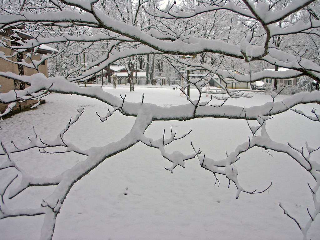 Feb 12.  Through the snow-covered branches of the little dogwood tree.