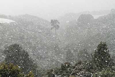 Snowing in Riverstone, Upper Hutt - Monday 15th August 2011.