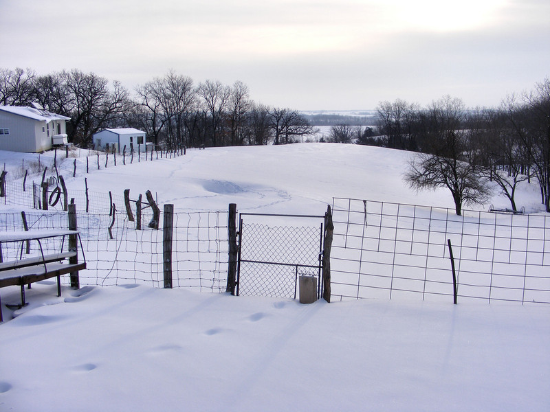 Fresh Snow For The Dogs To Track In.<br /> After 8 or 9 inches of new snow, it gives the landscape a different look.