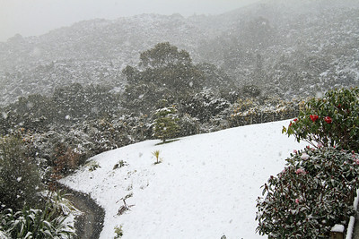 Snowing in my backyard, Riverstone, Upper Hutt - Monday 15th August 2011.