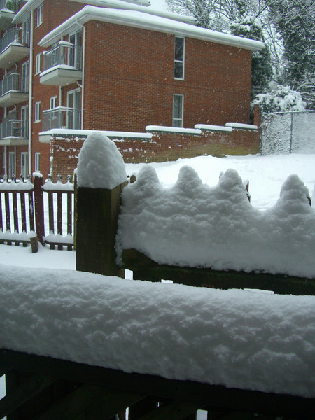 I love it when its snowy and still and it settles on everything!
