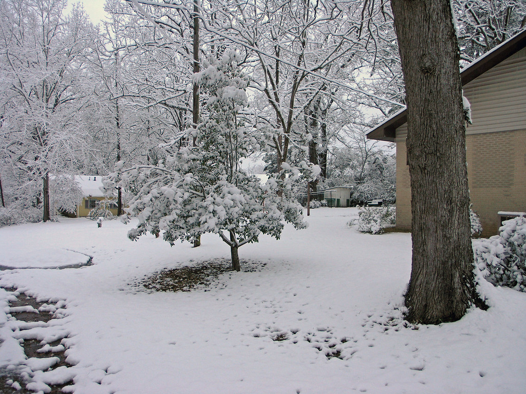 Feb 12.  Toward the back yard.