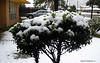 Snow in Baton Rouge