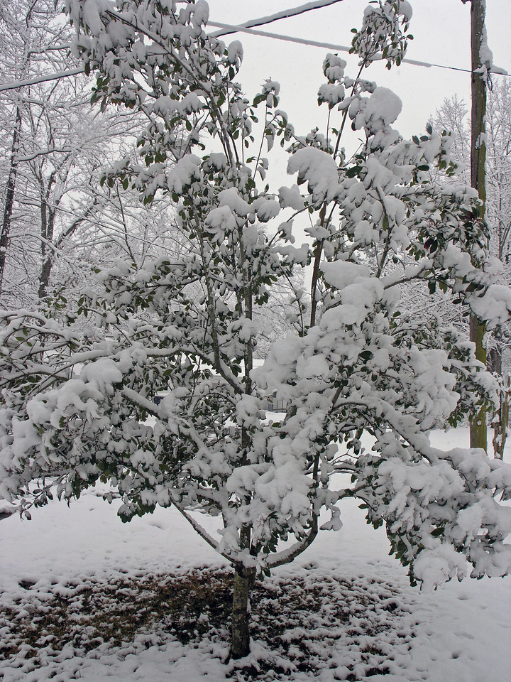 Feb 12.  Tree in our yard.