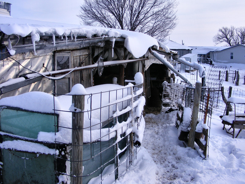 """The Animals Are Living Dangerously Under That Over-hanging Snow.<br /> There was enough wind to blow the snow around some, so it made some overhanging areas on the house and barn. Just waiting for some unsuspecting person or animal to get under it at the right time. Or would that be """"the wrong time""""?"""