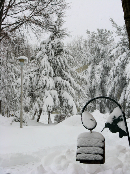 Evergreen branches bending under the deepening snow. <br /> <br /> 2-6-10