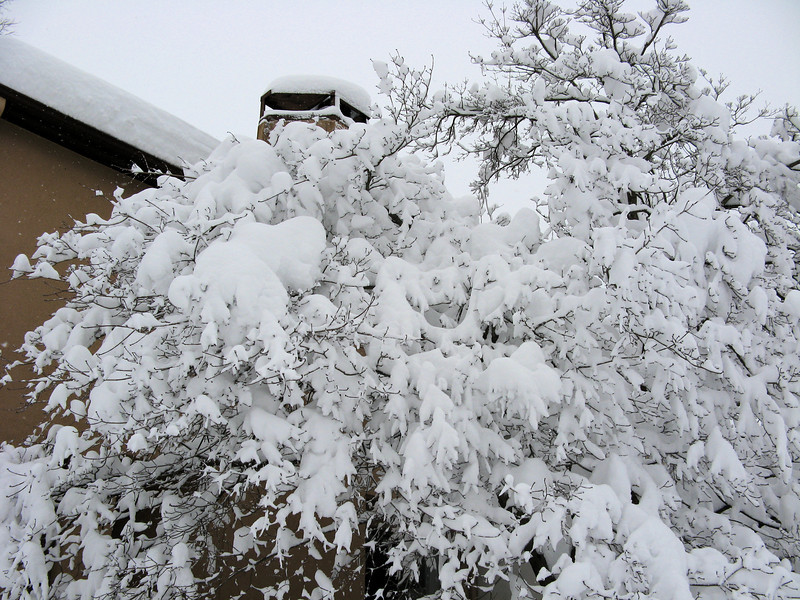 I'm grateful that with all this heavy snow only one large branch broke off the dogwood.<br /> <br /> 2-6-10