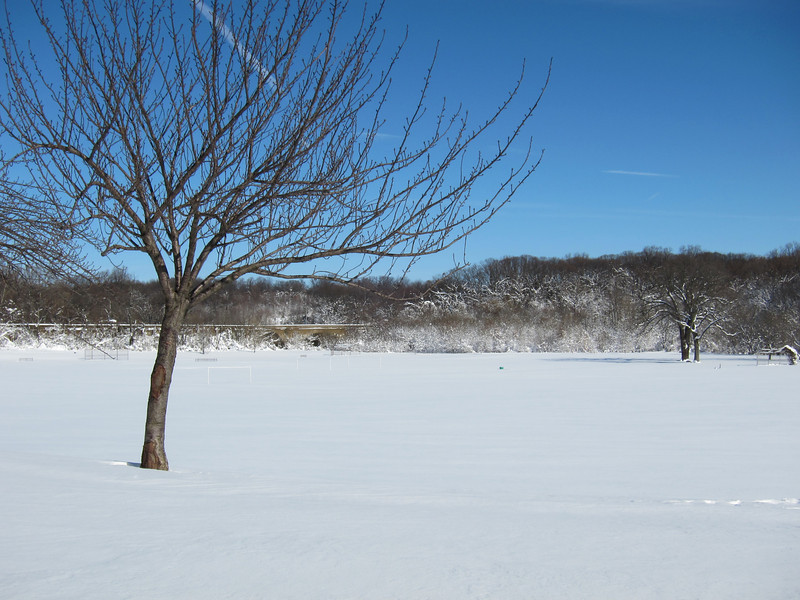 Herring Run Park, the day after the snowstorm.