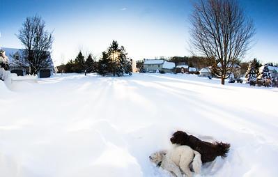 snowfall-03524