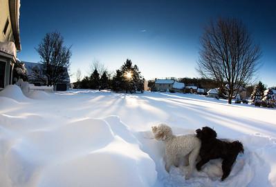 snowfall-03526
