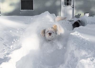 snowfall-05292