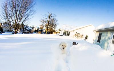 snowfall-03551