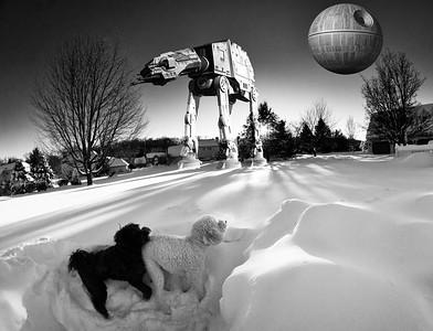 snowfall-035269-Edit