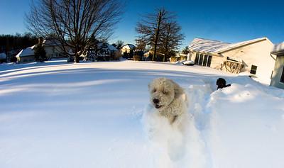 snowfall-03553