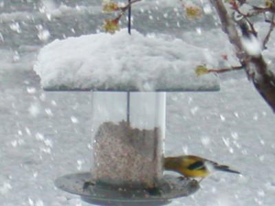 Snowstorm: Leesburg, VA: March 30, 2003