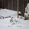 18  G Snowy Under Aspen