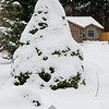 49  G Snowy Tree V