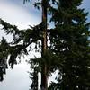 15  G 2nd Lightning Strike Tree