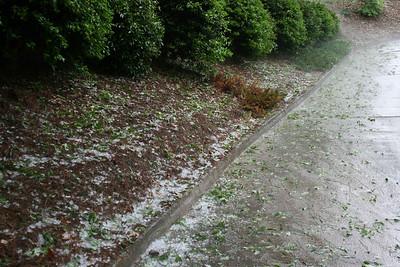 Hail along side the driveway,