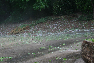 Hail along side our driveway.