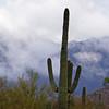 Mist rising on Wasson Peak, November 13, 2011