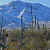 Snow in Tucson, AZ day after the storm Feb 21, 2013