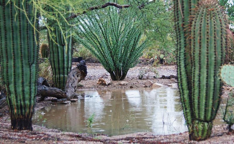 Rain in the Desert, July 2012