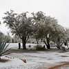 Snow in Tucson, AZ Feb 20, 2013