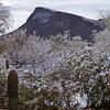 Snow in Tucson, Arizona Feb 27, 2011