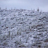Snow in Tucson, Arizona Feb 27, 2011