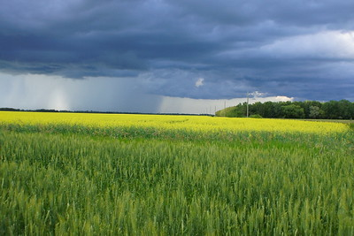 Storms over crops