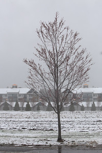 Mid-April snow leaves patterns on the fields along East Street in Tewksbury. Red maple tree with The Residence at Joan's Farm apartment complex in the background.  JULIA MALAKIE/LOWELLSUN