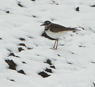 Mid-April snow leaves patterns on the fields along East Street in Tewksbury. Bird on the field by East Street Farm Stand. (Best guess is a killdeer, and bird expert I know from Newton confirms.) JULIA MALAKIE/LOWELLSUN