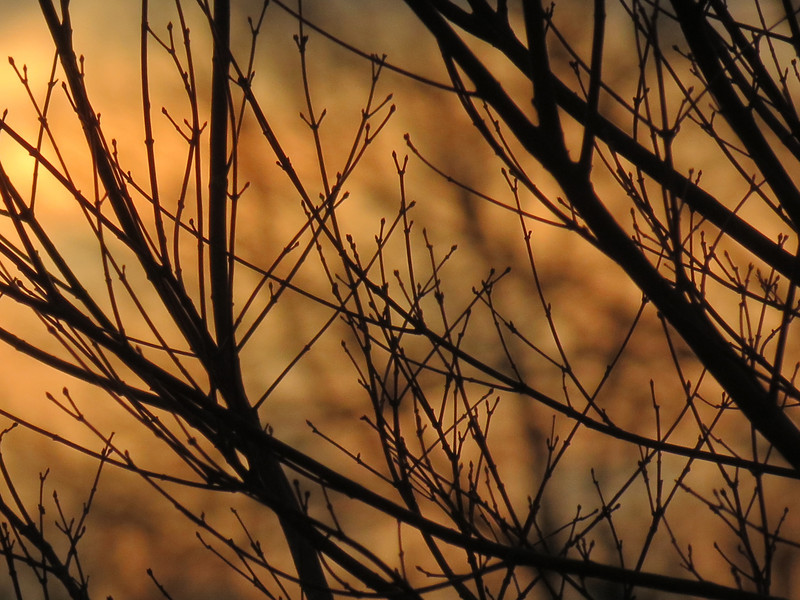 I thought this sunset color was nice as seen through the Japanese Maple.<br /> It was a very warm, cloudy and windy January 28, 2013.