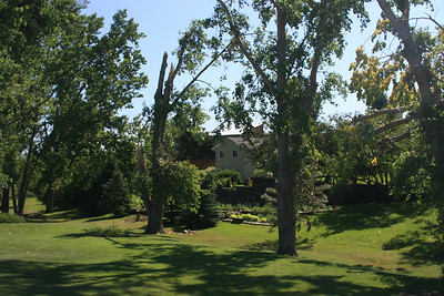 Some of the cottonwoods in the creek north of the barn are badly damaged.