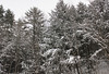 That's alot of snow covered trees surrounding my house