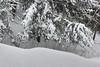 Mountains of snow.