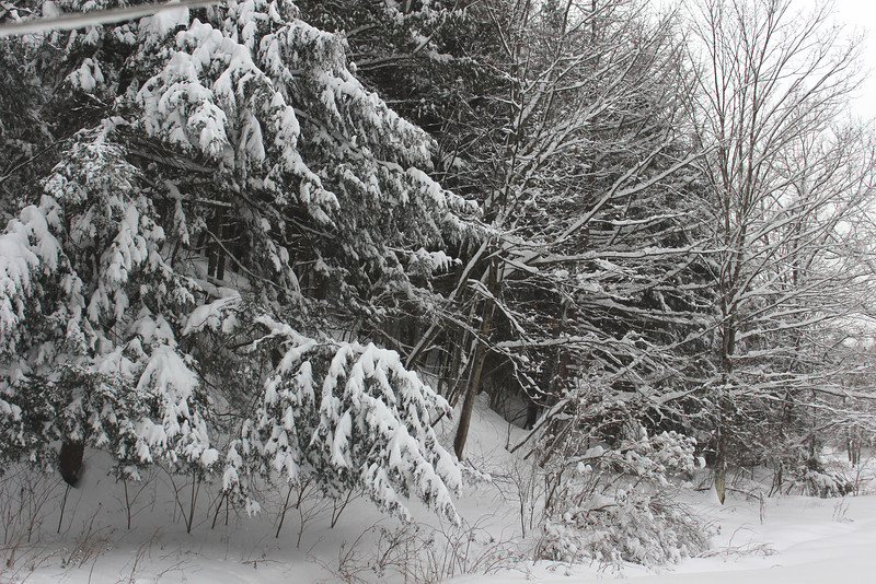 Back yard trees are blanketed.