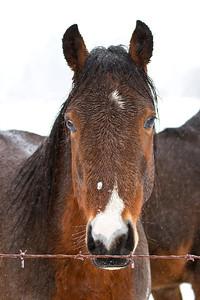 Very wet horse!