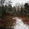 A wild thicket