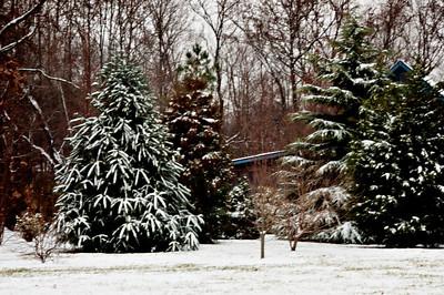 Walk in the  Snowy Woods 20011