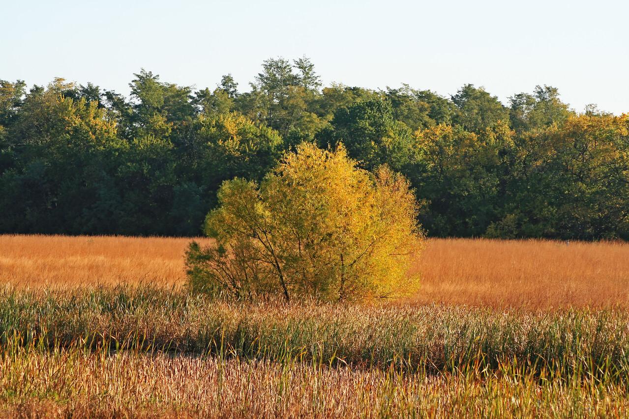 October 18 - Rock Springs Environmental Center, Decatur IL