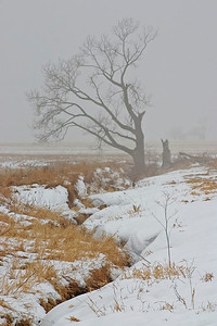 January 15 - Logan County Illinois