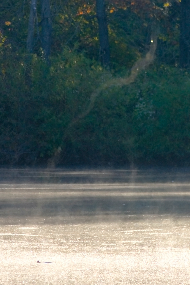 October 8 - Rock Springs Conservation Area, Macon County Illinois