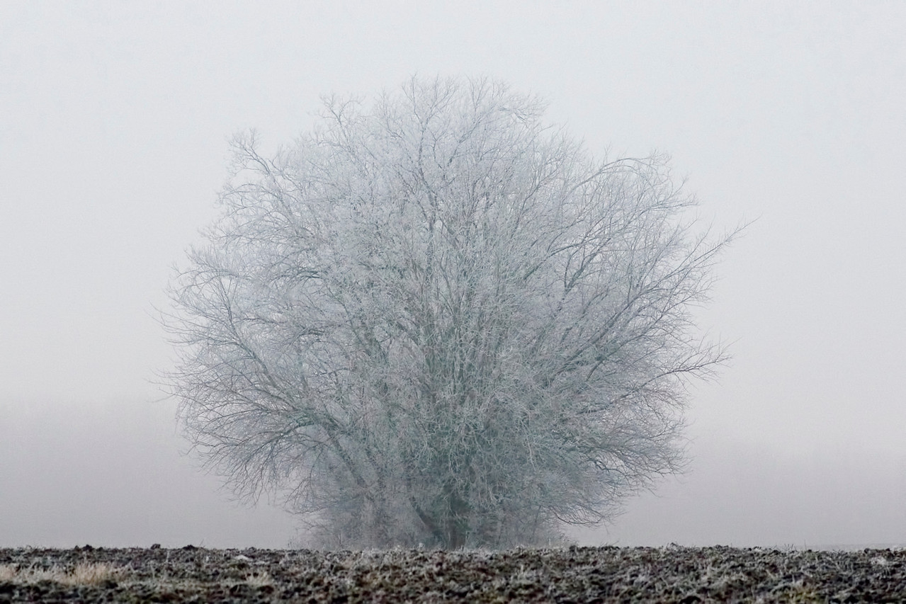 January 23 - Freezing Fog, Macon County Illinois