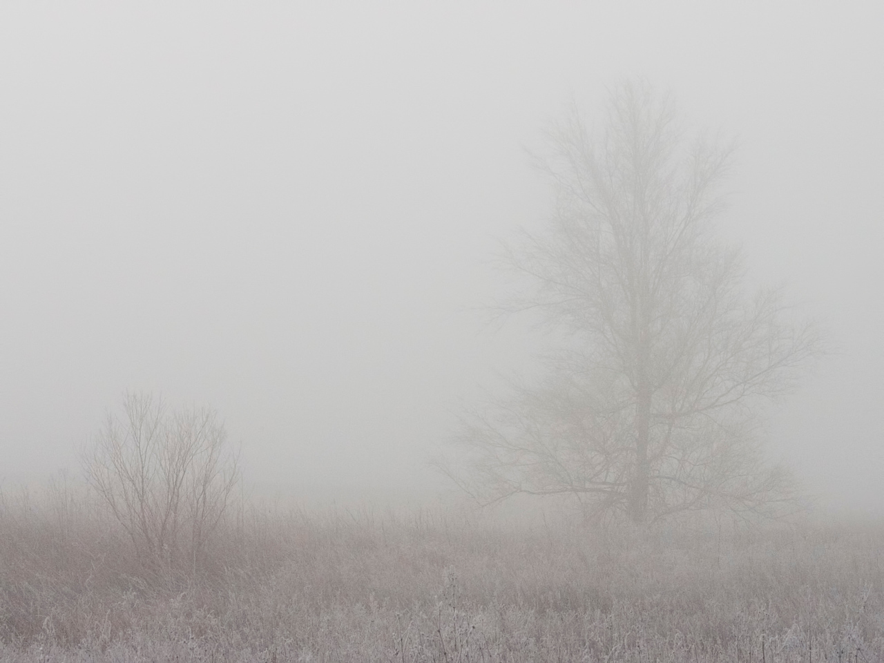 February 2 - Freezing Fog, Logan County Illinois