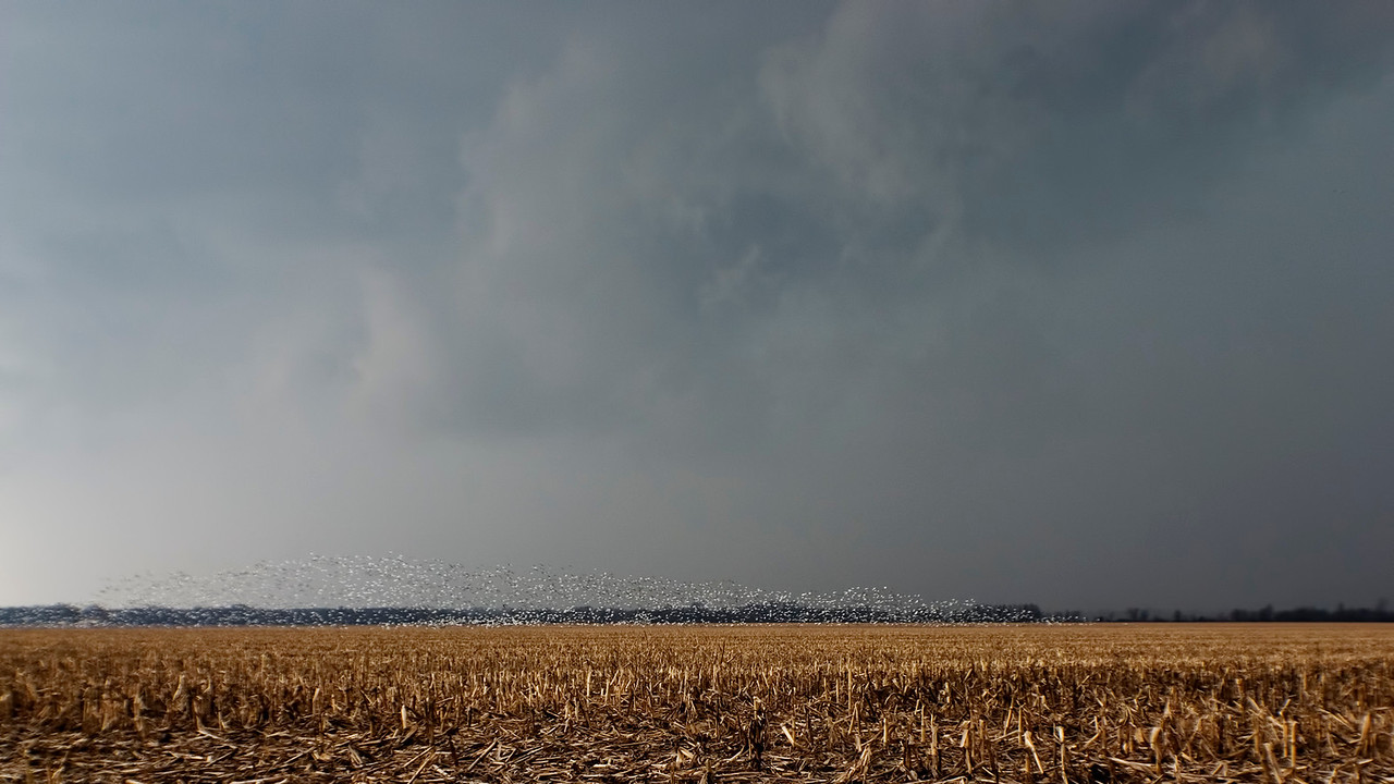 March 2 - Severe Thunderstorm with Snow Geese, Marion County Illinois