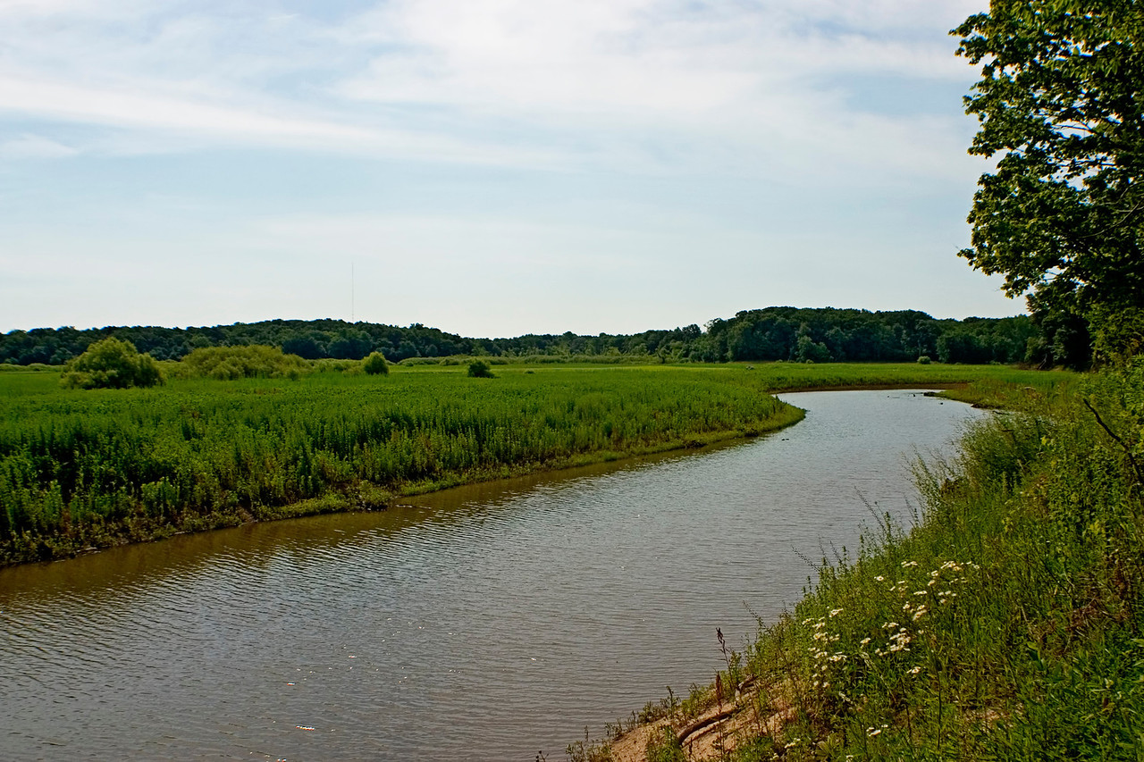 June 15 - West Okaw State Fish and Wildlife Area, Moultrie County Illinois