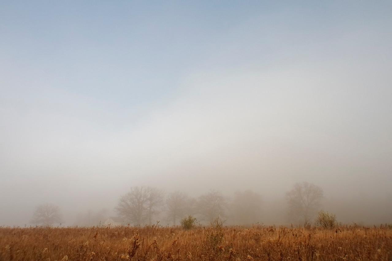 November 21 - Dense Morning Fog, Weldon Springs Park, Dewitt County Illinois