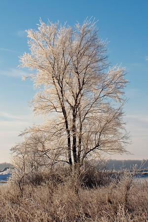 January 2 - Hoar Frost, SW Macon County IL